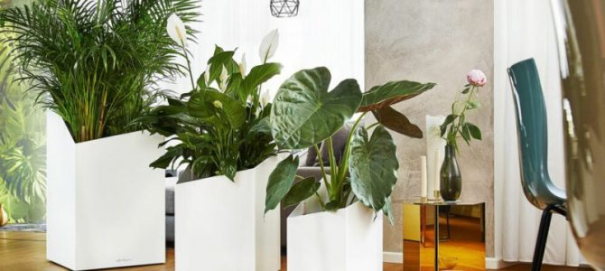 Комнатные растения в и интерьере